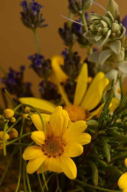 desert garden, small sunny garden, amy myers, photography, monday vase, argyranthemum frutescens, eremophila hygrophana, lavender goodwins creek gray