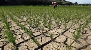 #AiruntukKehidupan: Antisipasi Ancaman Bencana Kekeringan Tahun 2020