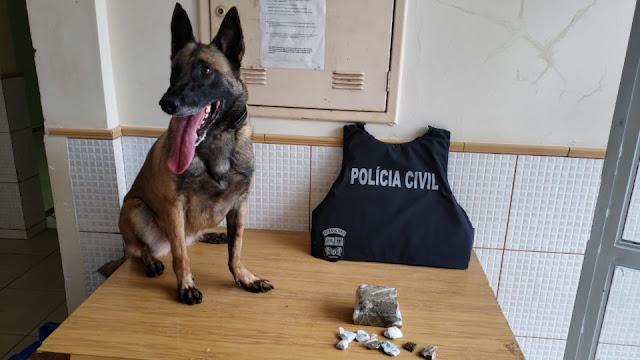 Ação conjunta da polícia resulta na apreensão de meio quilo de maconha e prisão de suspeito de homicídio registrado no final de semana em Campo Mourão