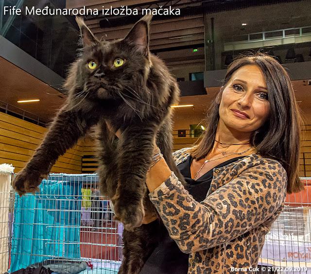 Fife Međunarodne izložbe mačaka / Fife International Cat Shows Rijeka