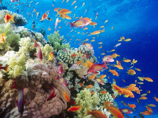 Дайверы пожаловались на таинственный пугающий шум со дна Красного моря