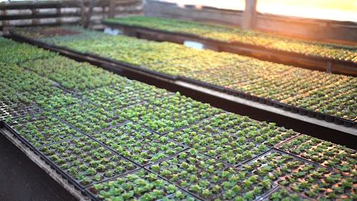 «Растекс» планирует расширить производство цветочной продукции на территории агрофирмы «Подмосковное»