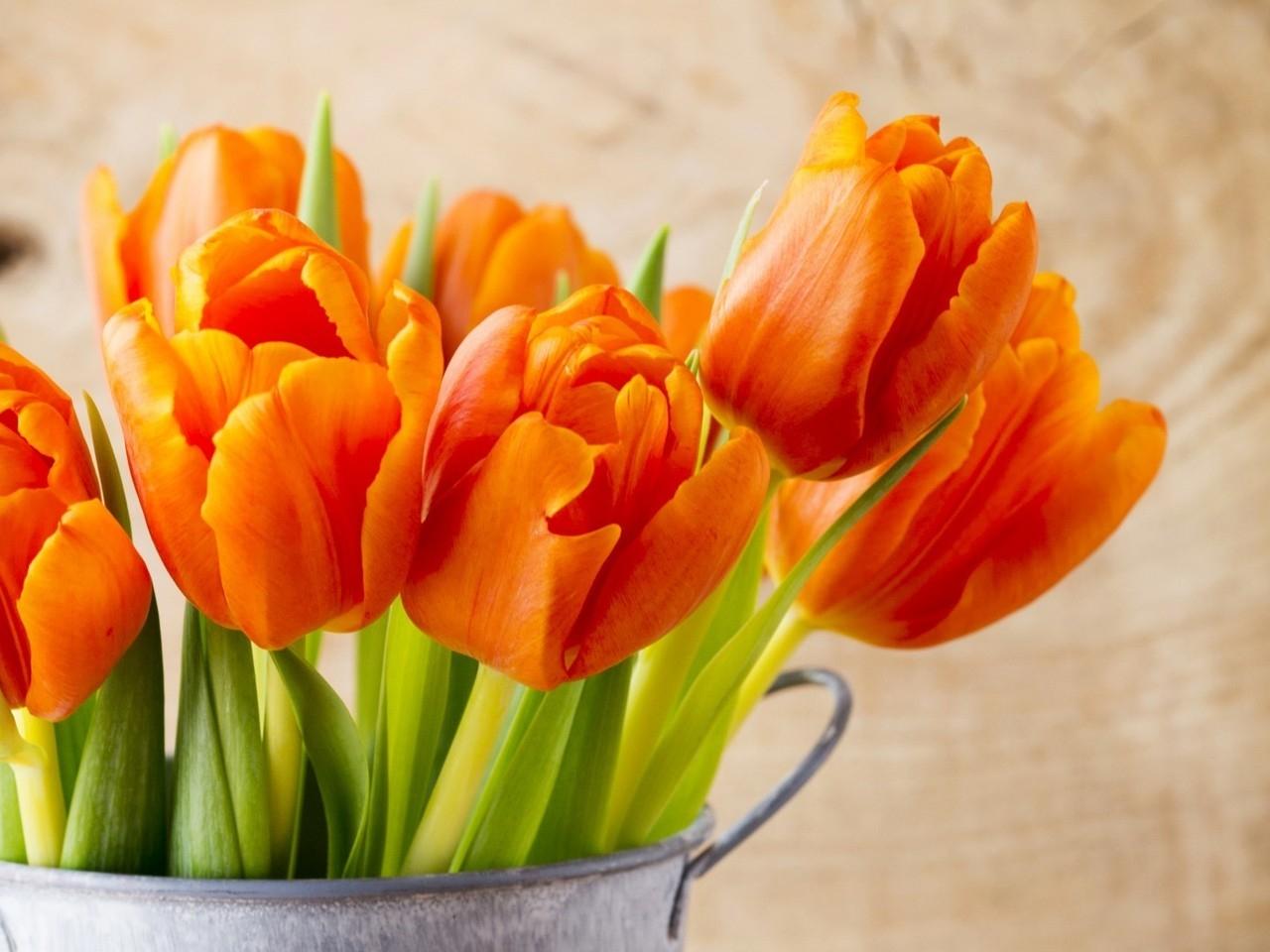 Banco de im genes 12 fotos de flores preciosas en varios colores para compartir - Fotos flores preciosas ...