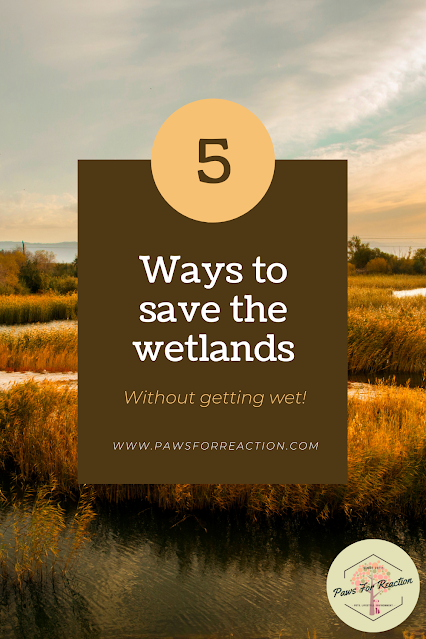 Help from home: 5 ways you can help save Canada's wetlands, without getting wet