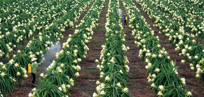 Hướng dẫn thủ tục mua bán chuyển nhượng đất nông nghiệp mới nhất 2021
