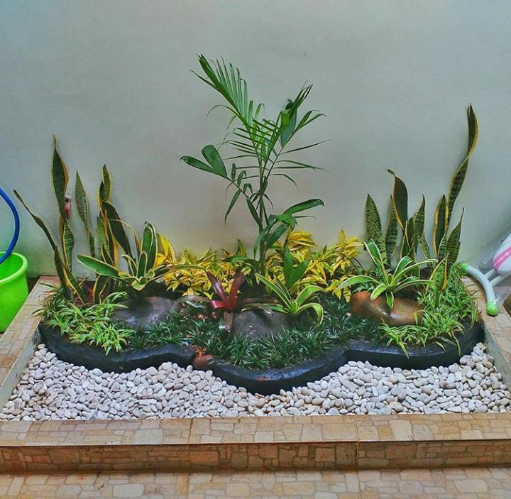 10 Galeri Foto Taman Kering Dalam Rumah Indoor Garden