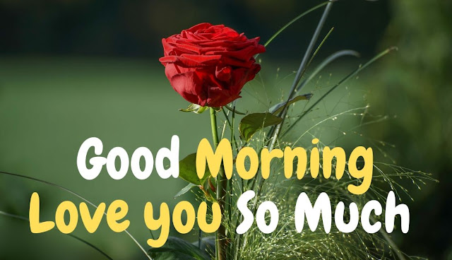 Good Morning Love you So Much Red Rose Image