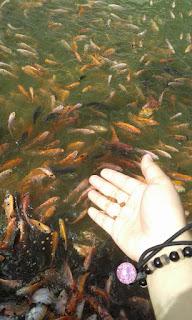 tentang ikan
