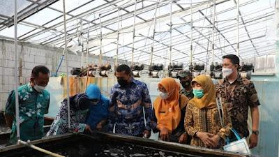 Wagub Audy Berharap Budidaya Ikan Sidat Dikembangkan di Sumbar