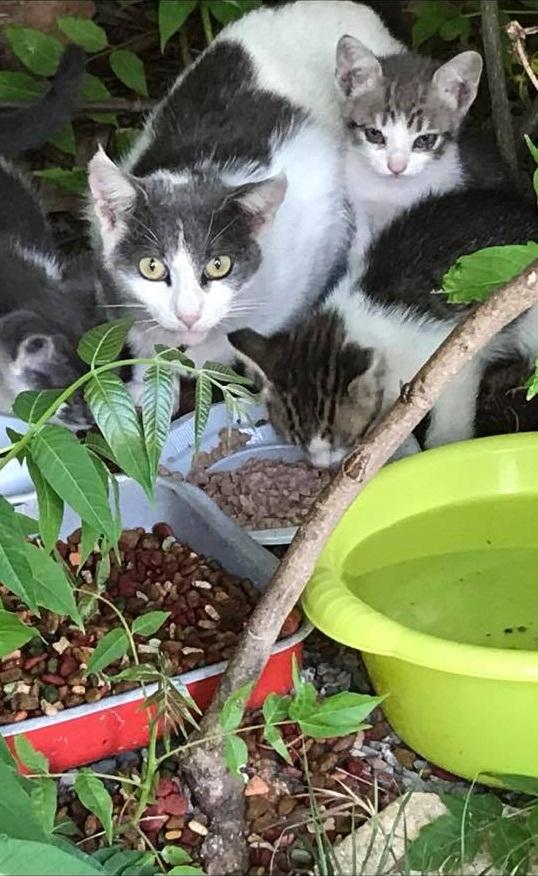 Induk dan Anak Kucing Makan