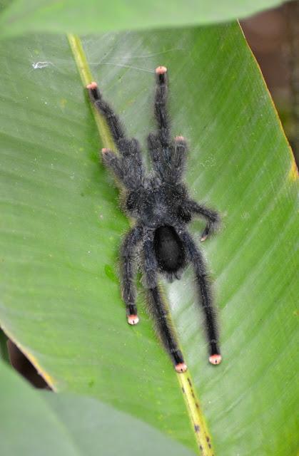 Guyane, Kourou, CSG, centre spatial Guyanais, CNES, savane, nature, singe, perroquet, visite.