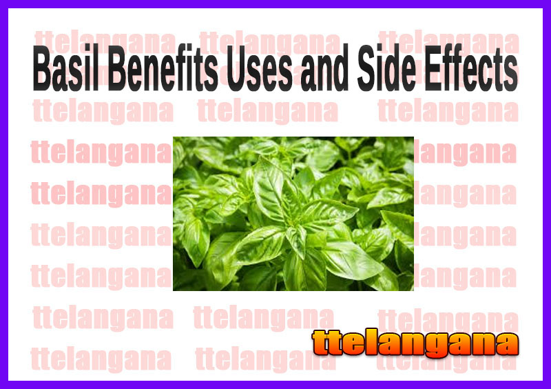 Basil Benefits Uses and Side Effects