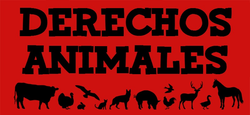 DERECHOS ANIMALES EBOOK DOWNLOAD