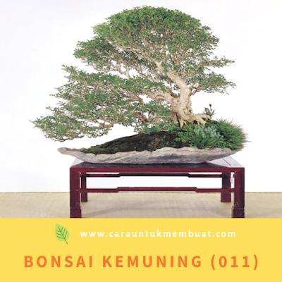 Bonsai Kemuning (011)