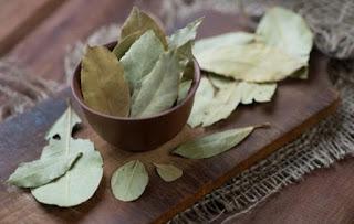 Bay leaves, benefits, uses, skincare, haircare