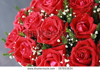 Rose Day Wishes for free download