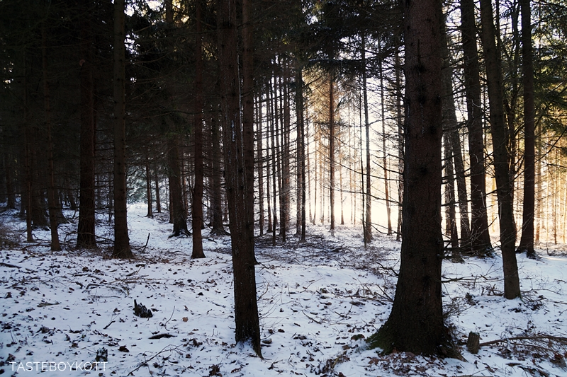 Sunny snowy winter day in the forest   Tasteboykott