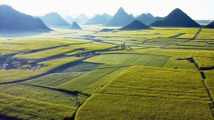 Luoping county,wisata china,taman bunga,padang bunga,hijau