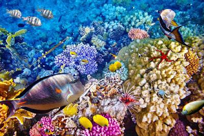 Diving Menjangan - 5D4N Luxury Dive Safari Tour - SALIKA