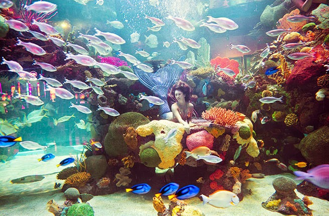 Show de sereias no Mermaid Aquarium, em Las Vegas