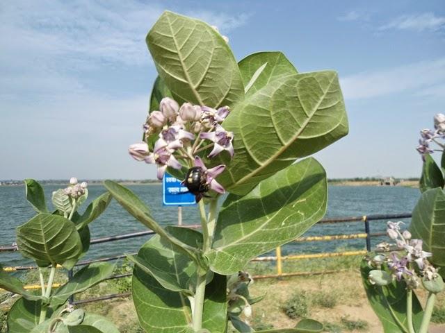 ये फूल आपको बना देगा बला की खूबसूरत, कई बीमारियों के इलाज में भी है मददगार