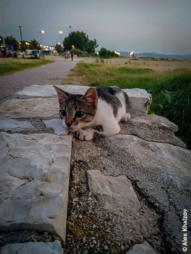 греческий котейка