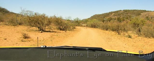 Near Punda Maria on good gravel roads