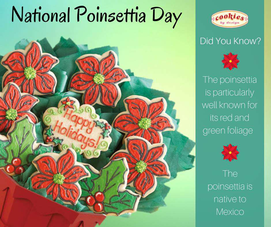 National Poinsettia Day Wishes