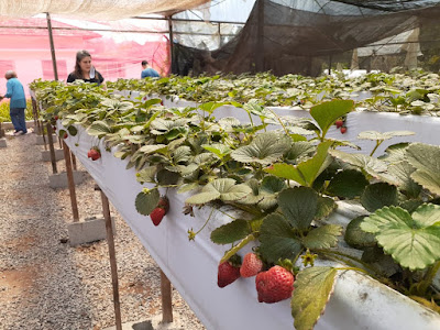 6 experiências para redescobrir e degustar Atibaia-SP ao ar livre