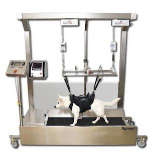 equipamentos para cães voltar a andar