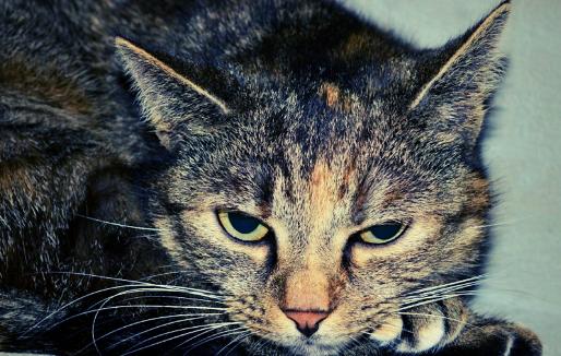 Vous avez un chat malade ? 9 façons de savoir si votre chat souffre