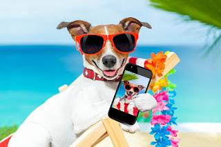 ilginç hayvan resmi ile ilgili aramalar komik yazılı hayvan resmi komik hayvan resmi indir ödüllü hayvan fotoğrafları en güzel hayvanlar resmi hayvan resmi hayvan görselleri hayvan resimleri toplu değişik hayvan fotoğrafları