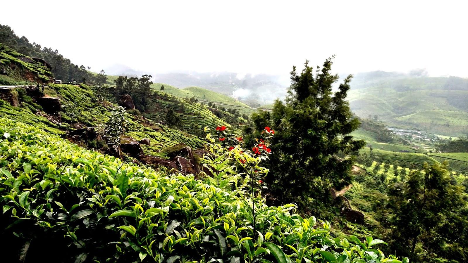 Photo point - Munnar in Monsoon