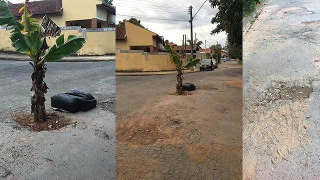 Moradores plantam bananeira em buraco de rua como protesto em Pinhal