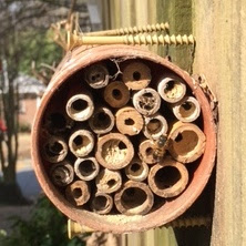 bee, beekeeping, conservation, native solitary bee,