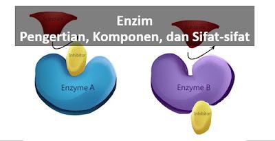 pengertian enzim, komponen enzim, macam enzim, sifat enzim