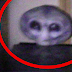 Grey Alien Encounter Caught on Camera