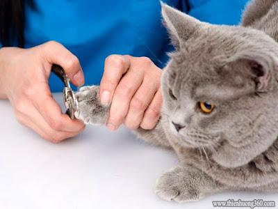 Cắt móng chân cho chó mèo đúng cách, an toàn