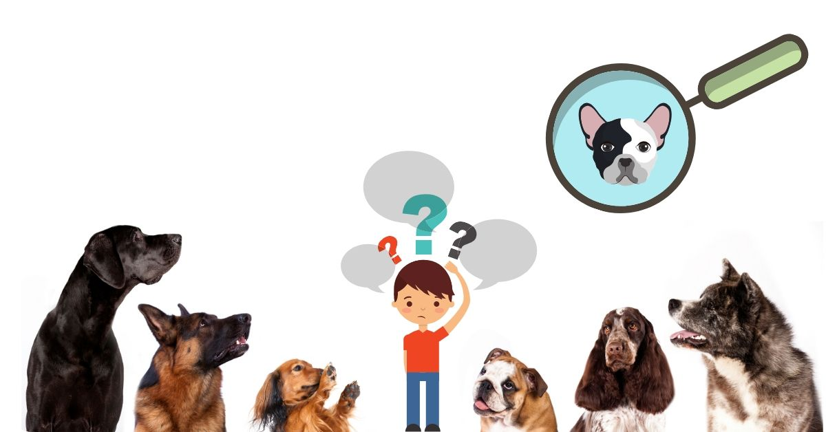 find your Ideal dog breed