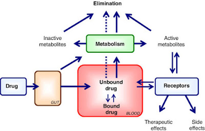 Drug distribution is the process by which a drug reversibly leaves the bloodstream and enters the interstitium (extracellular fluid) and the tissues
