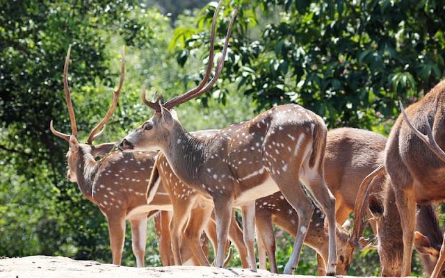 Dalhousie Attraction - Kalatop Wildlife Sanctuary Khajjiar
