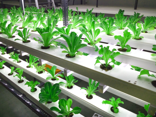 MAKING HYDROPONICS WORK FOR EVERYONE