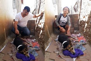 Em Picuí, cadela atingida por objeto perfuro cortante não morreu e se recupera bem