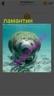 под водой плывет ламантин 5 уровень 400+ слов 2