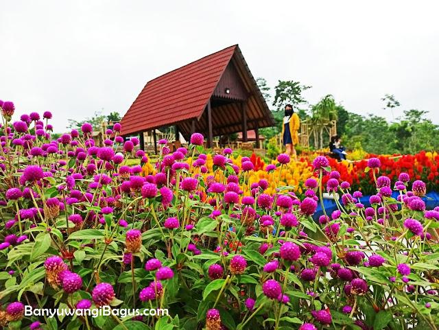 spot bunga cantik di Agrowisata Taman Suruh Banyuwangi.