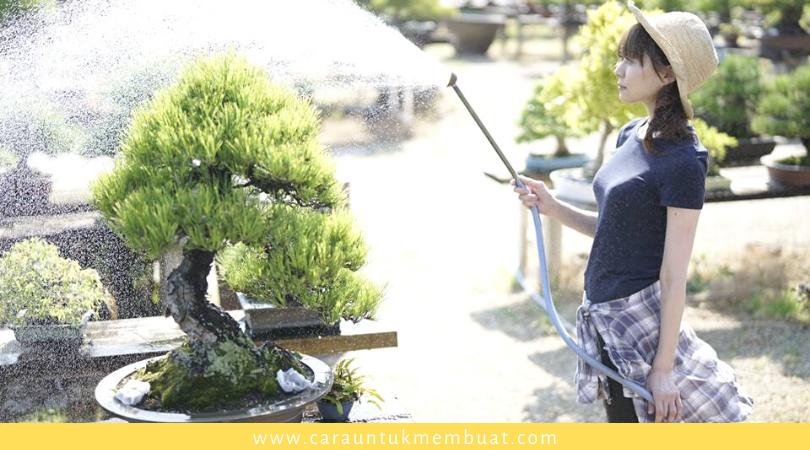Pemeliharaan Bonsai