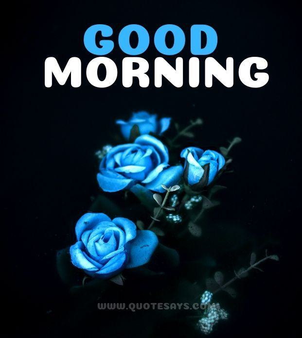Good morning Blue Rose