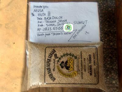 Benih padi yang dibeli   MUSA Simalungun, Sumut.  Sebelum packing karung).