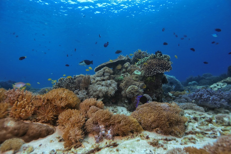 "<a href=""http://mataram.info/things-to-do-in-bali/visitindonesia-banda-marine-life-the-paradise-of-diving-topographic-point-inward-fundamental-maluku/"">Indonesia</a>best destinations : The Healing Pinkish <a href=""http://mataram.info/"">Beach in Indonesia</a>"