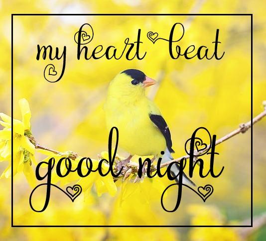 Free good night Images 1